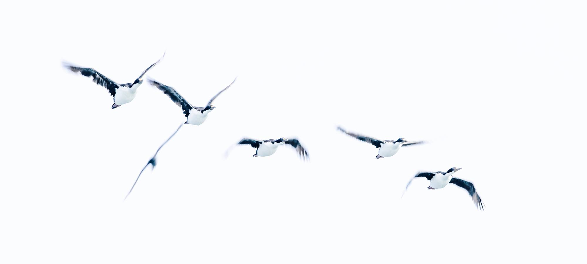 Vögel 4